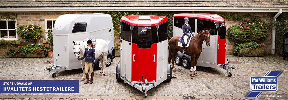 Ifor Williams hestetrailer | Salg, leasing og udlejning